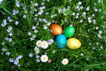 egg hunt: colorful Easter egg in the fresh  spring meadow