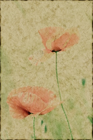 old paper background with poppy  flowers  grunge photo