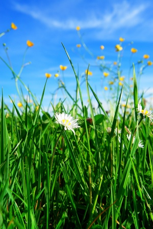 beautiful spring flowers against a blue sky Stock Photo - 17987123