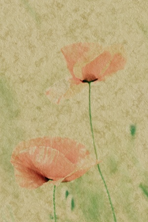 parer: Picture of some poppys on a field on parer