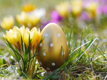 crocus with easter eggs on meadow Stock Photo - 18562296