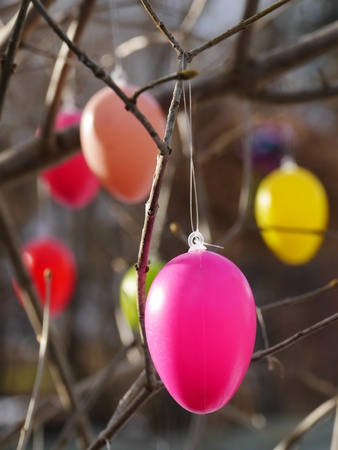 Easter eggs hanging on  branches photo