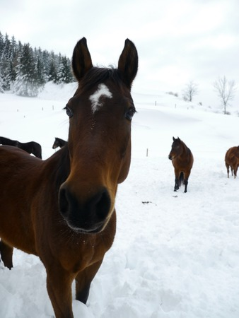 horses out side at cold winter time Stock Photo - 23150896