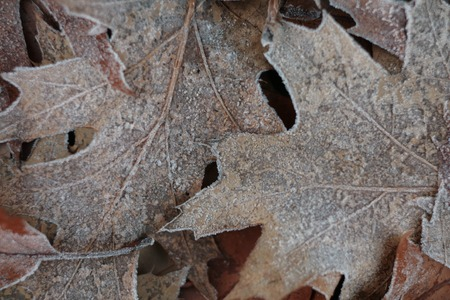 bleakness: Close-up of some leave in the ground