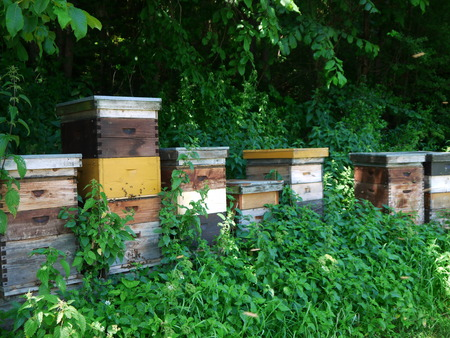 beekeeping: Beekeeping with Trees in Background