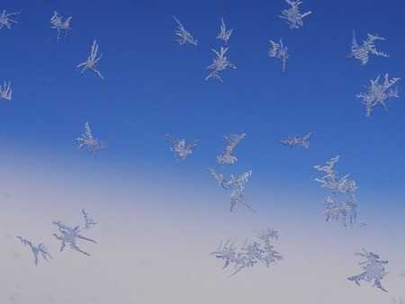 iceflower: frost ice crystal on a window pattern
