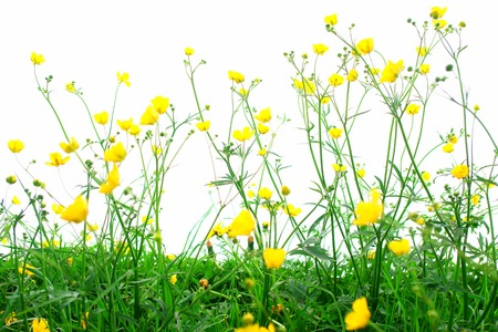Spring flowers isolated on white with grass and soil photo