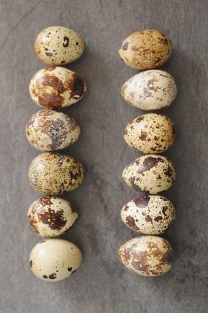 huevos de codorniz: Huevos de codorniz sobre un fondo oscuro