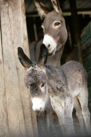 encounters: cute donkeys  Stock Photo