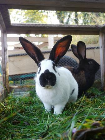 rabbit cage: Coniglio bianco e nero in una gabbia