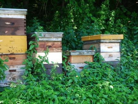 beekeeping: Beekeeping with Trees