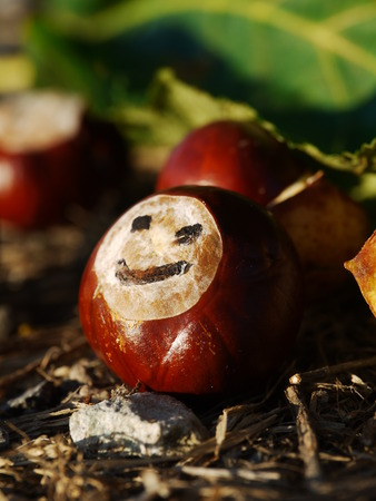 conkers: a portrait of a group of conkers with a smile Stock Photo