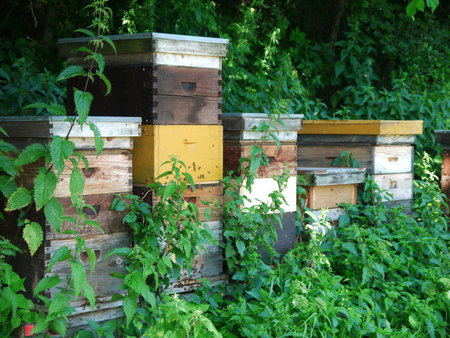 beekeeping: Beekeeping with Trees in Background