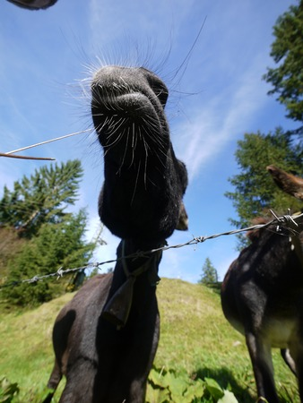 fench: A donkey standing on grass behind a fench Stock Photo