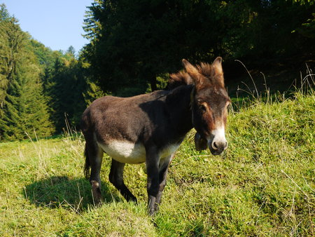 encounters: A donkey standing on grass behind a fench Stock Photo