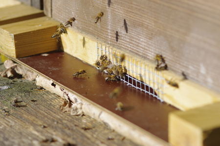 beekeeping: close of Beekeeping beehives bees are ready to fly