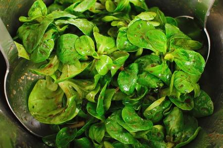 cornsalad: Green cornsalad mache salad lettuce field corn Stock Photo