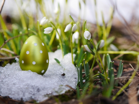 gynoecium: Easter egg meadow snowdrop snowflake outside in the meadow Stock Photo