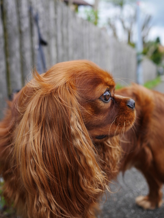 a little cute and brown dog Stock Photo