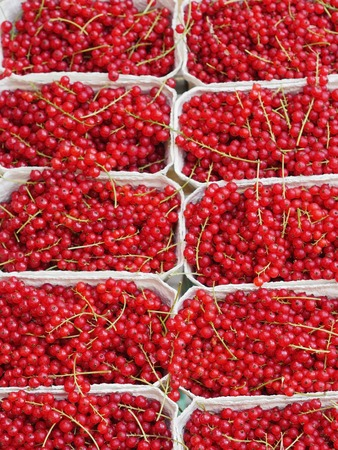 bacca: red currant  organic in boxes  on market