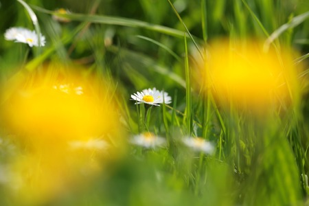 frhling: spring flowers in a field