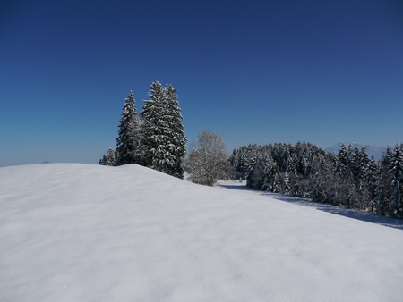 a beautiful snowy landscape with a forest