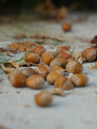 collected: Shelled hazelnuts top view. hazelnuts outdoor collected