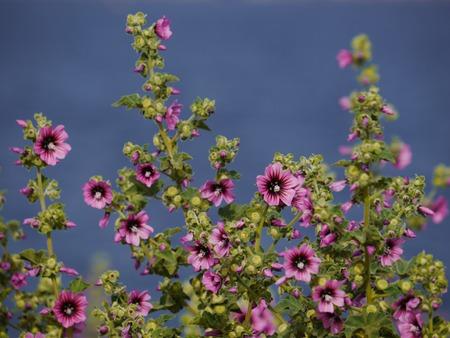 descriptive color: a lot of purple flowers