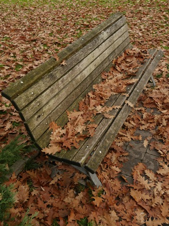 autumn colouring: bench standing in leafes in autumn