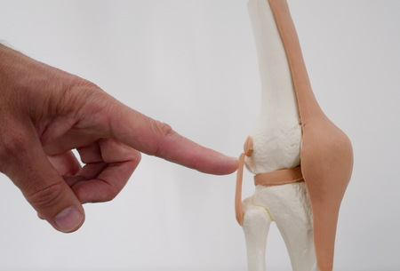 Close-up of hands pointing of a model of a knee joint
