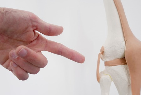 chiropractor: Close-up of hands pointing of a model of a knee joint