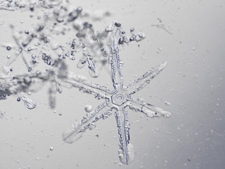 snowflake snow: photo real snowflakes during a snowfall, under natural conditions at low temperature Stock Photo