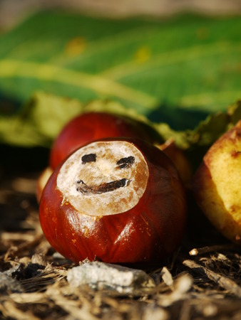 horse chestnut seed: a portrait of a group of conkers with a smile Stock Photo