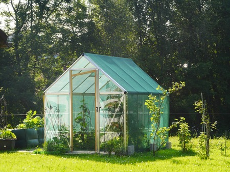 growing inside: rural greenhouse with cucumbers growing inside