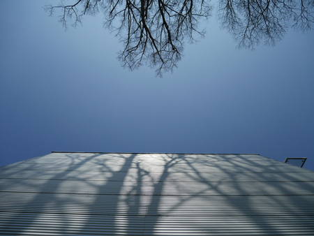 from below: Trees casting shadow on metal facade of building.From below Stock Photo