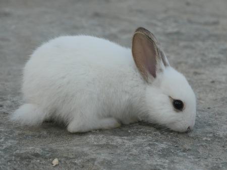 Close-up of littly white rabbit on ground