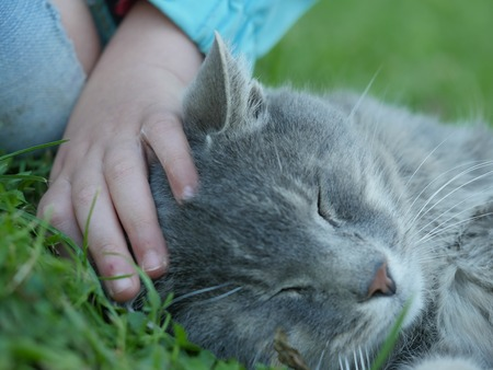 stroking: Close up of unrecognizable person stroking smoky cat feeling pleasure with eyes closed while lying on grass
