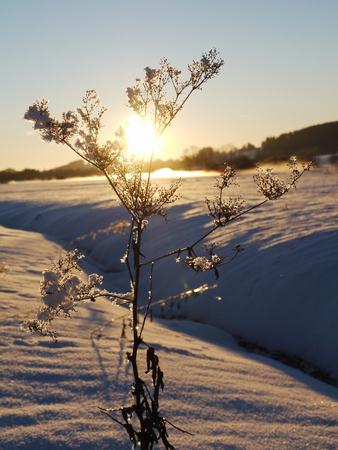 sund: Branch in hoarfrost against the sund