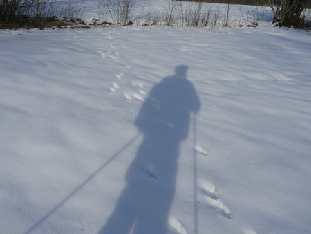 skiers: Skiers shadows on snow surface
