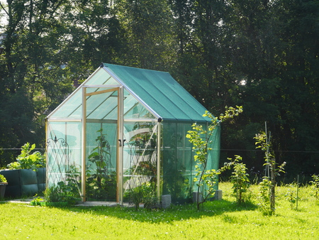 self assembly: rural greenhouse with cucumbers growing inside