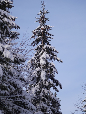 Trees covered with hoarfrost and snow in mountains Stock Photo
