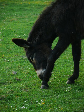 donkey green meadow