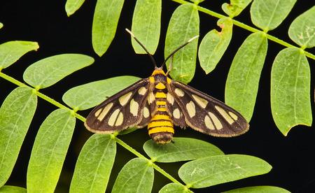 Macro insect close up