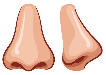 Illustrazione vettoriale del naso su sfondo bianco