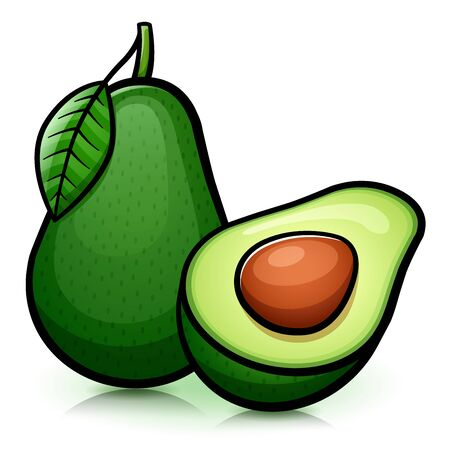 Vector illustration of avocado isolated design drawing