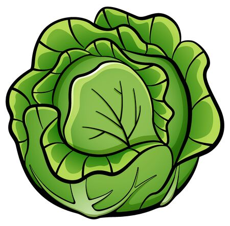 Vector illustration of cabbage design drawing isolated
