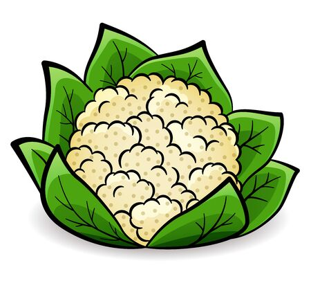 Vector illustration of cauliflower design drawing isolated