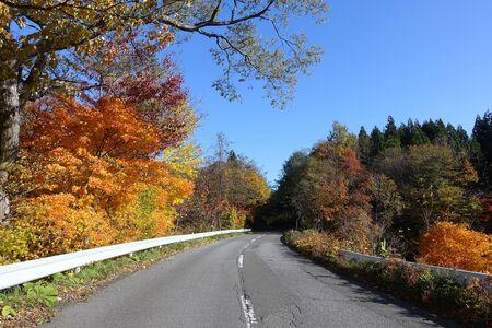 The road to Lake Towada where the tree sea line leaves leaves