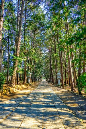 Rows of trees in front of Keigenji temple 写真素材