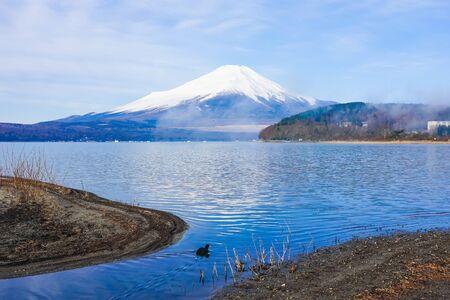 Mt. Fuji from the shore of Lake Yamanaka where waterfowl swim